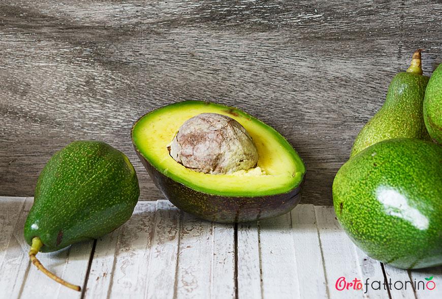 Tutto quello che c'è da sapere sull'avocado